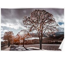 Contrast infrared view of the road in countryside, Alsace, France Poster