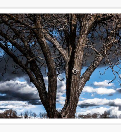 Infrared contrast portrait of beautiful tree, season specific Sticker