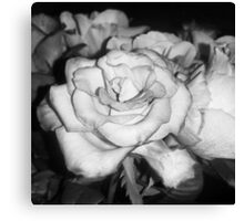 Black and White Open Rose Canvas Print
