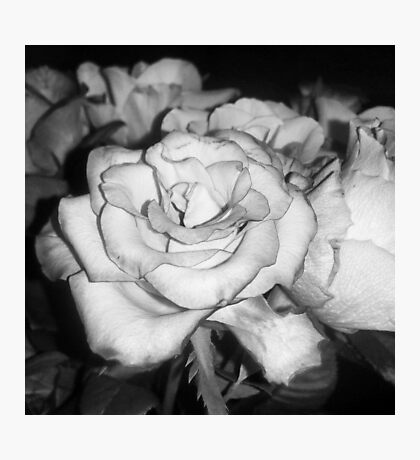 Center Black and White Rose Photographic Print
