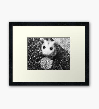 Tremble the Baby Opossum #2 Framed Print