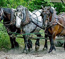 Three  heavy horses by Maryna Gumenyuk