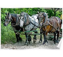 Three  heavy horses Poster