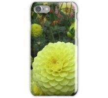 Yellow balls - a lovely dahlia iPhone Case/Skin