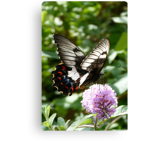 Orchard Swallowtail Canvas Print