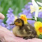 Why? Duckling Springs Flowers - NZ by AndreaEL