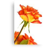 Autumn Splendor Rose Canvas Print