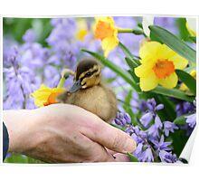 Loving Life! - Duckling NZ Poster