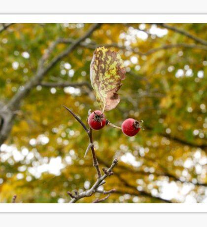 Red on Yellow Autumn Sticker