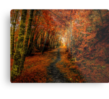 Trails In The Woods ~ Old Santiam Wagon Road ~ Metal Print