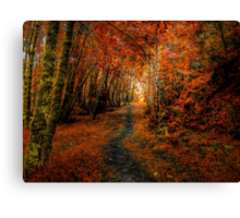 Trails In The Woods ~ Old Santiam Wagon Road ~ Canvas Print