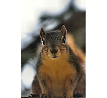 You're a pest lady! Photographic Print