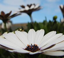 Field of Daisies by maddyh100