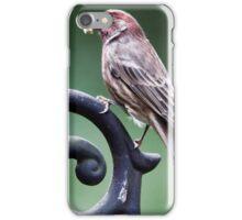 Patrick Purple Finch iPhone Case/Skin
