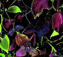 Leaves in color by jasonlee3071