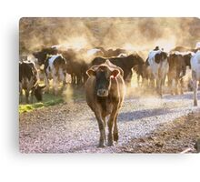 A Steamy Morning - Dairy NZ Canvas Print