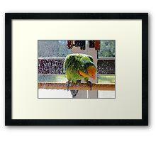 Shower Power - Barraband Parrot - NZ Framed Print