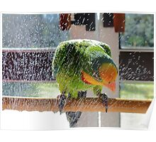 Shower Power - Barraband Parrot - NZ Poster