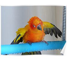 Turn It On - Sun Conure NZ Poster