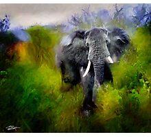 Uganda: Slick Ivory Photographic Print