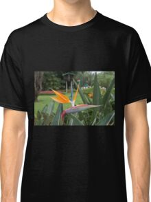 Strelitzia Bird of paradise flower / plant Classic T-Shirt