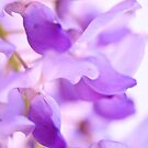 Asian Hyacinth by Jacquelyne Drainville