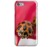Lady Beetles on red flower iPhone Case/Skin