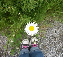Shoelaces and a Daisy by sisterphipps