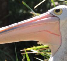 Pelican Portrait Sticker
