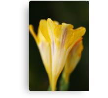 Freesia Yellow Canvas Print