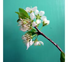 Still Life with Spring Photographic Print