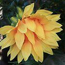 Broken Sunflower by pmarella