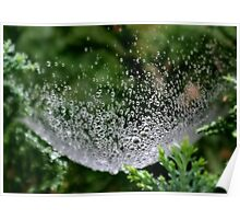 Raindrops in a Spider Web Poster