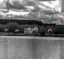 Row of Pink by SD 2010 Photography & Equine Art Creations
