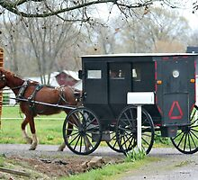 Amish Carriage by AnnDixon
