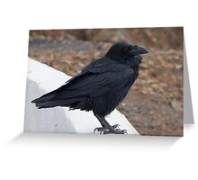 Raven perched on a ledge Greeting Card