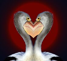 Pelican Love by Donuts