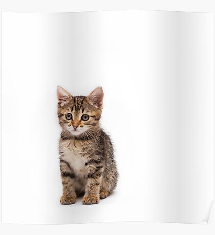 Little cute tabby kitten isolated on white background Poster