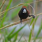 BIRD BRAIN! by NICK COBURN PHILLIPS