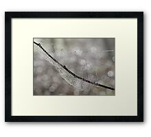 Forest Jewels, spiderweb, Canon EOS 10D Framed Print