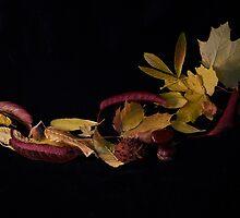 Autumn leaves by Sara Sadler