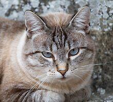 a cute cat by spetenfia