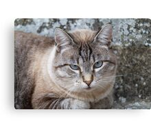 a cute cat Canvas Print