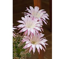scenic flower of a cactus plant Photographic Print