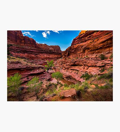 Coyote Gulch At Sunset - Grand Staircase - Escalante - Utah Photographic Print