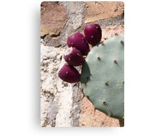 cactus in bloom Canvas Print