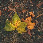 Autumn Mood by surbatovicmilan