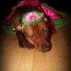The Truth About Pitbulls Series - Part 1 - *We love to play dress up* by Kristina Gale