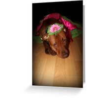 The Truth About Pitbulls Series - Part 1 - *We love to play dress up* Greeting Card