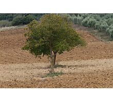 one tree in the hilly landscape Photographic Print